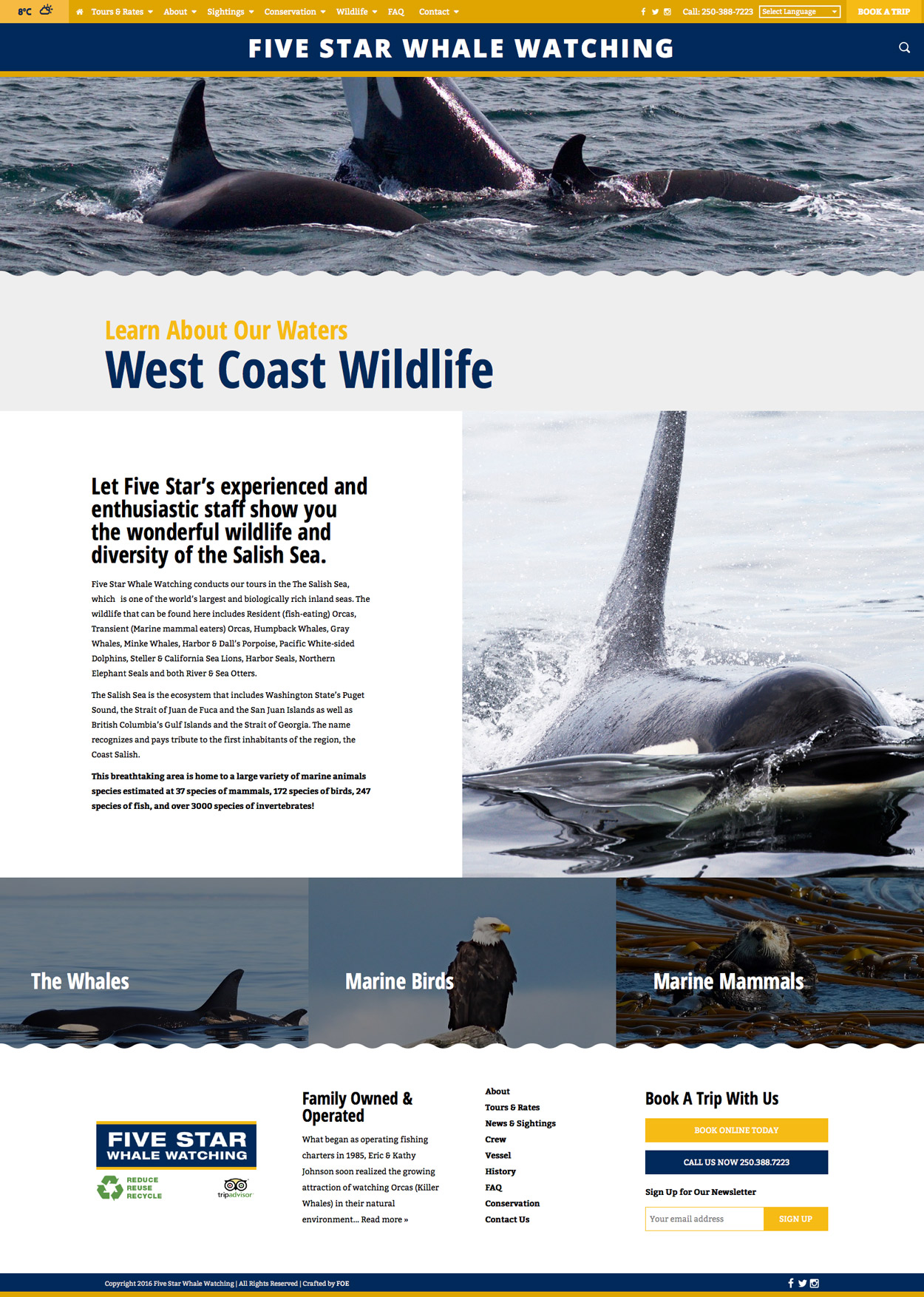 wild-life-5-star-whale-watching-victoria